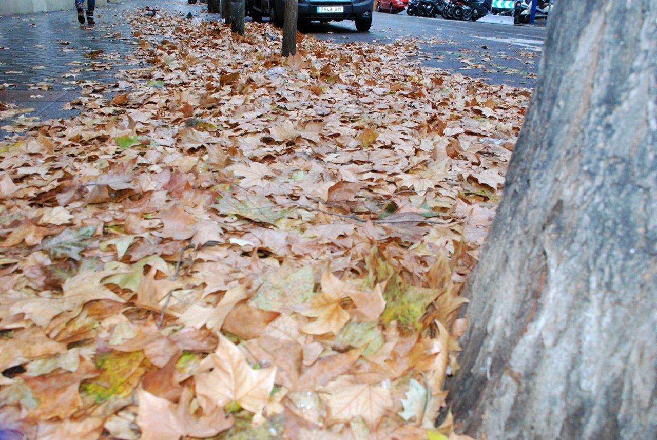 Imagen de una calle con acumulación de hojas
