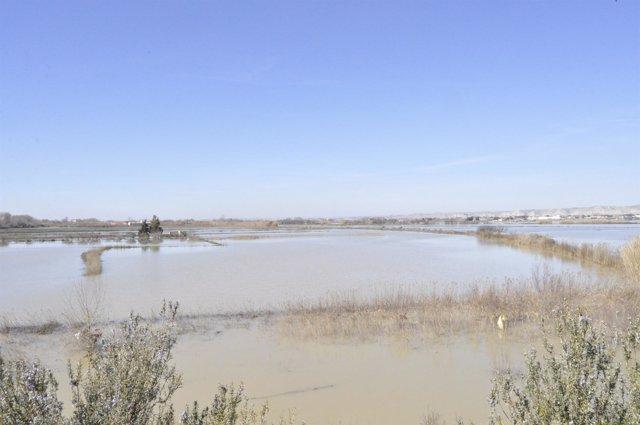 Zona afectada por la crecida extraordinaria del Ebro, en Zaragoza