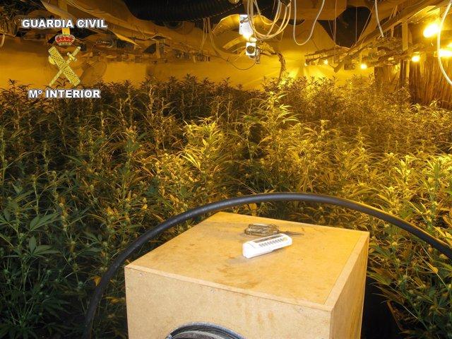 Plantación de marihuana en Benidorm