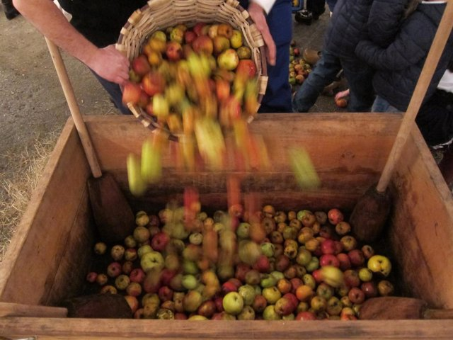 Manzana para hacer sidra.