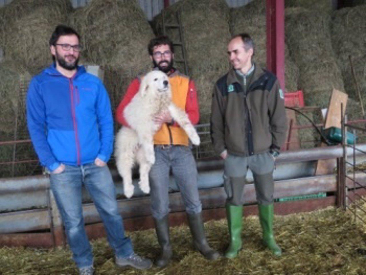 Perros para ahuyentar a osos en el Pirineo