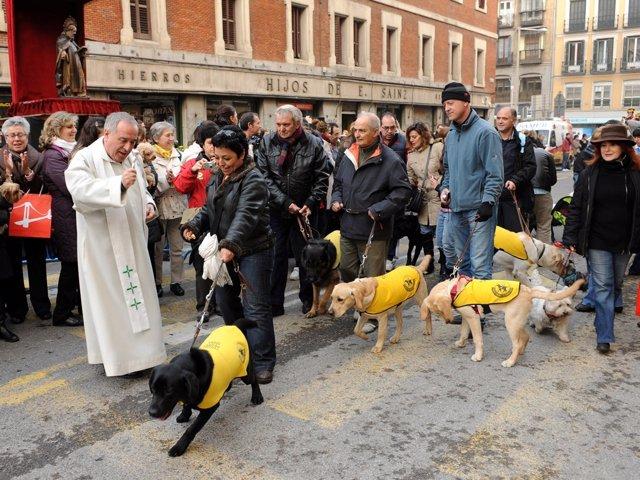 Futuros perro guía en las Vueltas de San Antón