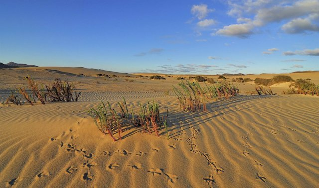 Parque Natural de Corralejo (Fuerteventura)