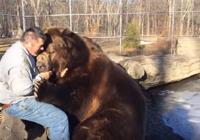 Así sería un auténtico abrazo de oso de 680 kilos
