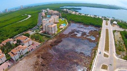 La construcción de un complejo hotelero liquida un tesoro natural de Cancún