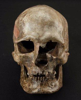 Cráneo incluído en el estudio