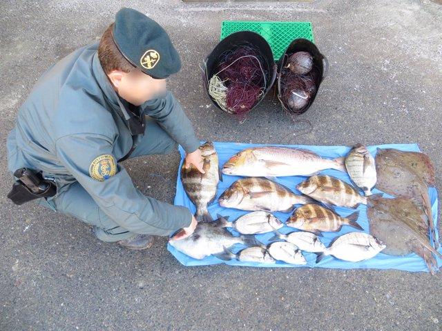 Pescado intervenido por el Seprona en Cabo de Gata