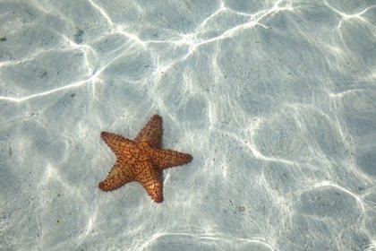 Lo que las estrellas de mar nos cuentan del cerebro