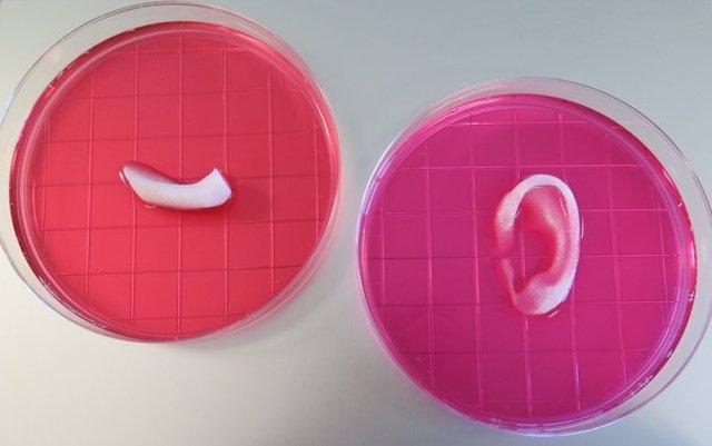 Imprimen-en-3D-hueso-cartilago-y-musculo-humano-a-tamano-real_