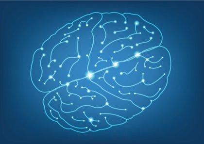 Identifican la 'zona cero' del Alzheimer en el cerebro