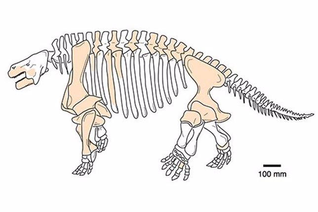 Esqueleto de Shihtienfenia, un gran pareiasaurio