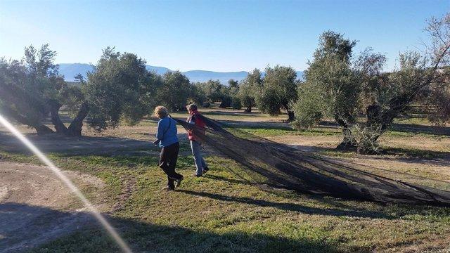 Turistas extendiendo los mantillos en el tajo