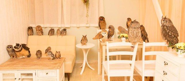 Cafeterías con búhos en Japón