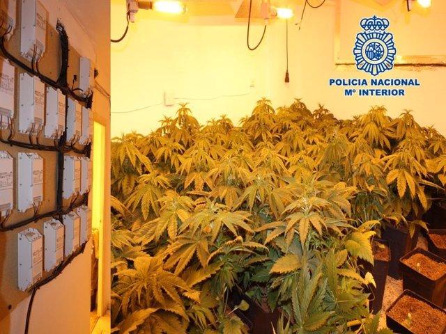 Invernadero de marihuana en Granada