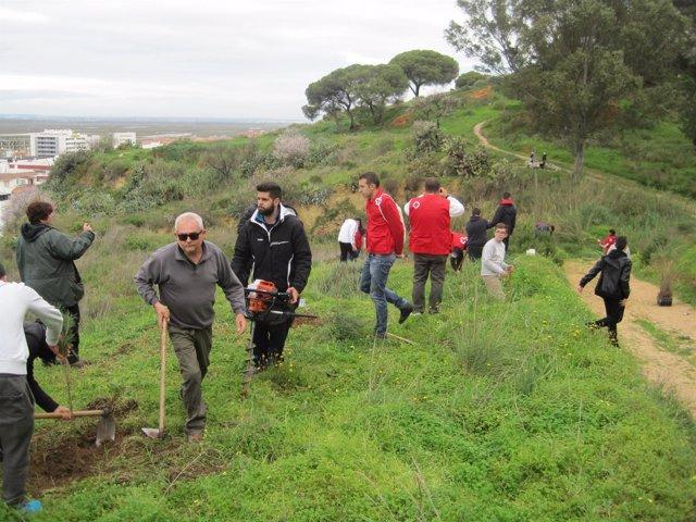 Reforestación en Huelva