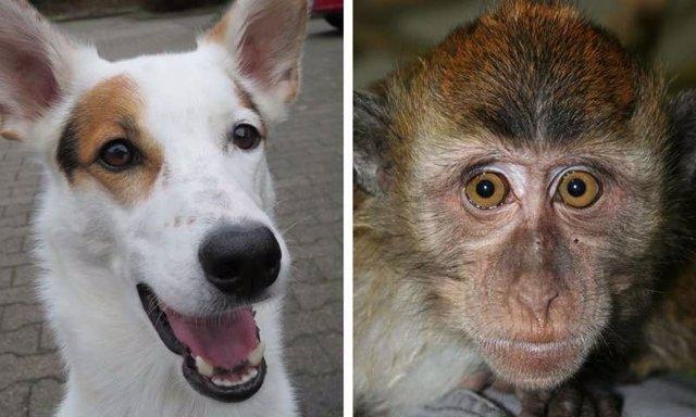 Perro y primate
