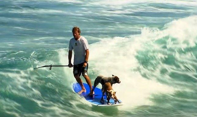 Chris y sus perros Millie y Rama haciendo paddle surf