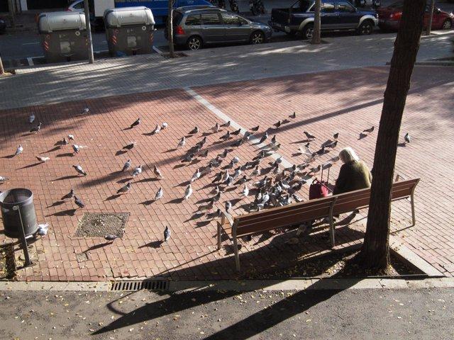 Una Barcelonesa Alimenta Palomas En El Eixample