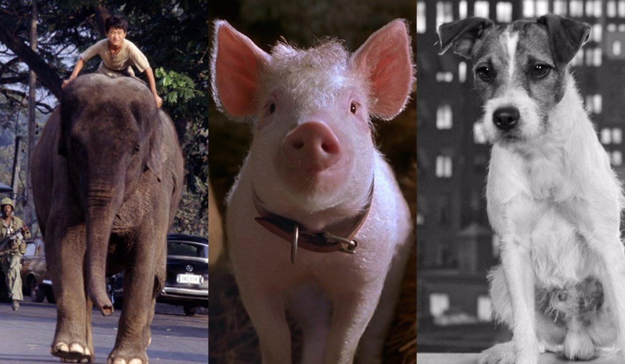 Animales de Oscar