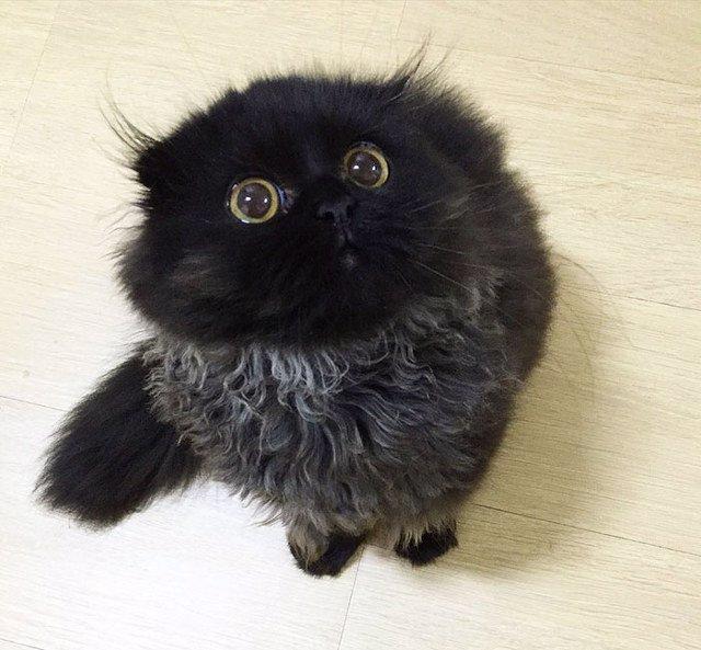 Conoce a Gimo el gato con los ojos ms grandes que hayas visto