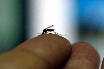 Científicos brasileños descubren la presencia del virus Zika en el mosquito común