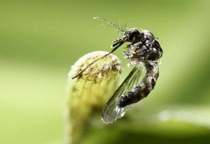 Algunas cuestiones que debes saber sobre el virus Zika