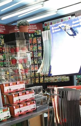 Ejemplares de peyote a la venta en una floristería de La Rambla
