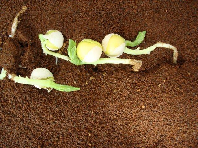 Cultivo en suelo marciano