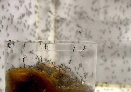 Un estudio realizado en Honduras halla 11 casos de Guillain-Barré asociados con el zika