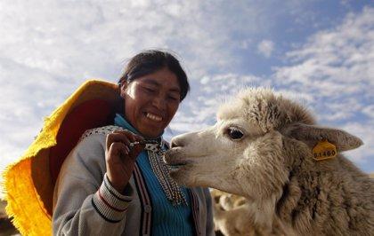 La lana de alpaca de Perú: de los Andes a las tiendas de lujo de todo el mundo