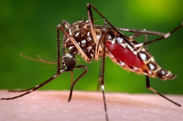 Maduro confirma la muerte de tres personas por el virus zika en Venezuela