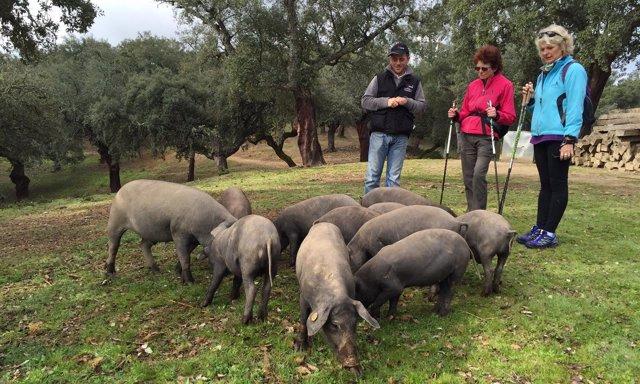 El grupo Nordic Walking conoce la provincia de Huelva