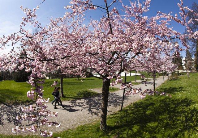 Primavera, flores, árboles