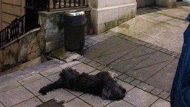 Blas, el perro que resultó muerto