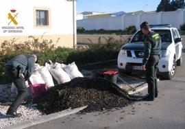 Diez detenidos y recuperadas más de 1,6 toneladas de aceituna robada en Córdoba