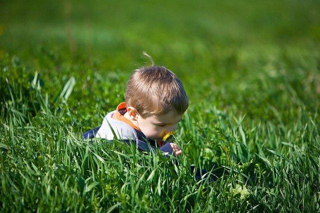 Olfato, oler, niño, flores campo, cesped