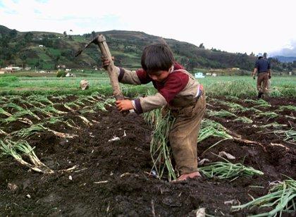 ¿Cómo es la situación del trabajo infantil en Iberoamérica?