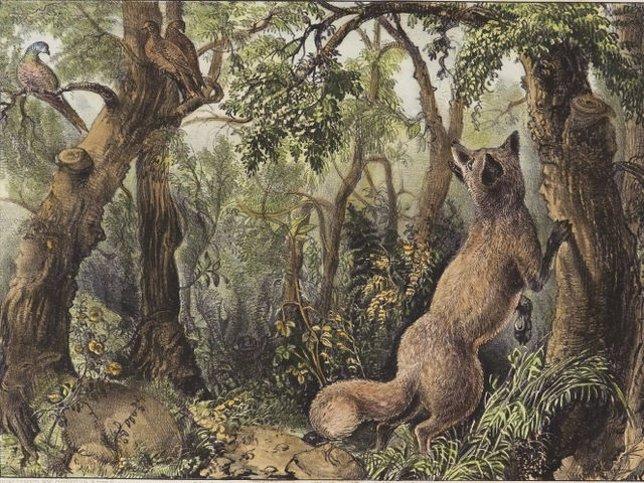 'The Puzzled Fox' ('El Zorro Desconcertado')