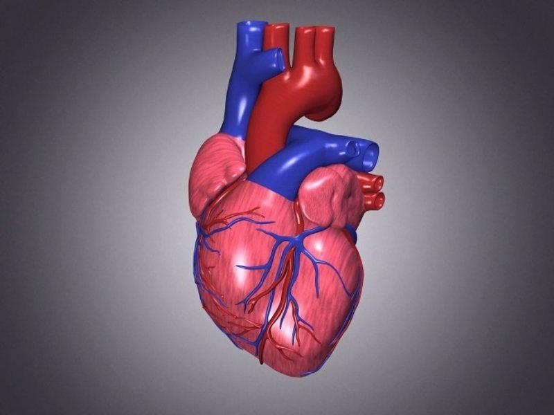 Crean injertos de corazón a partir de células madre pluripotentes ...
