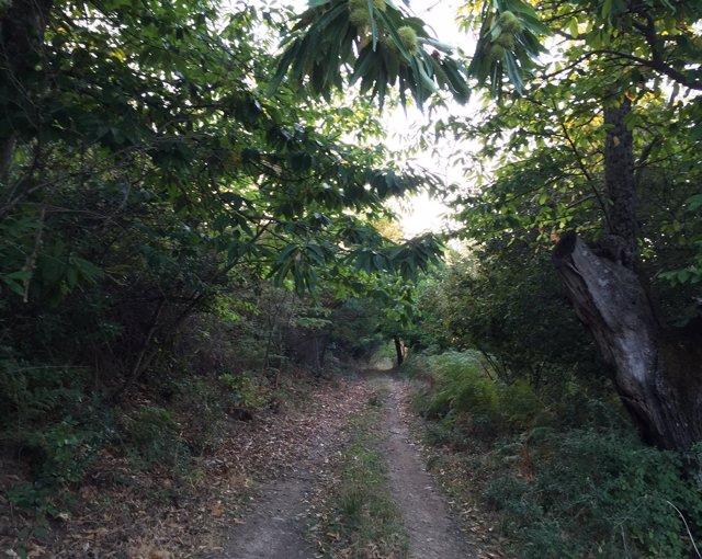 Ruta senderista por Mirabel (Cáceres)