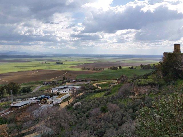 Paisaje agrario de Carmona