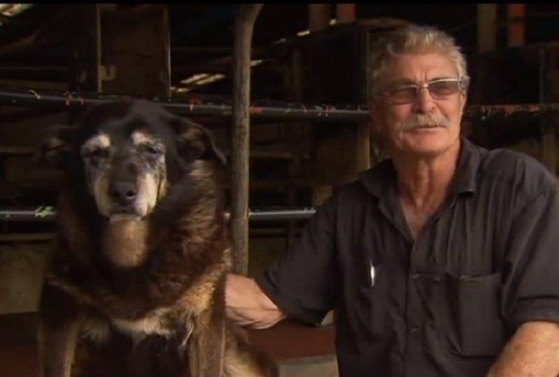 """Muere el """"perro más viejo del mundo"""" a la edad de 30 años"""