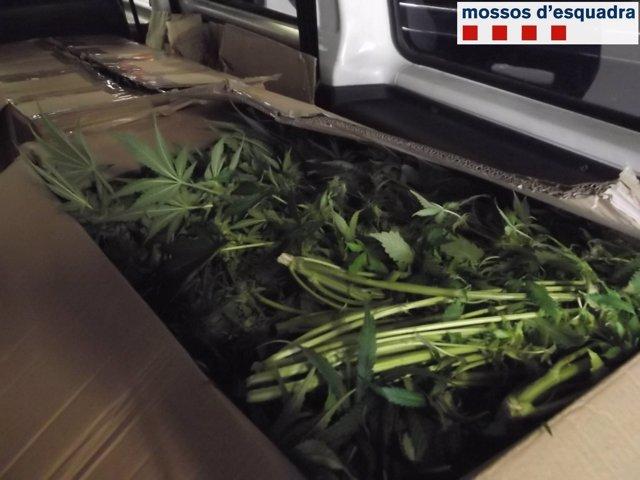 Detenido un hombre de 66 años cuando transportaba 40kg de marihuana