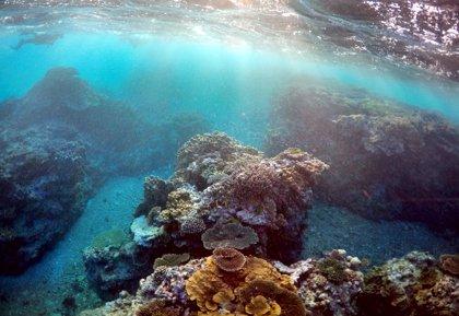 Descubren un gran arrecife de coral en la desembocadura del río Amazonas
