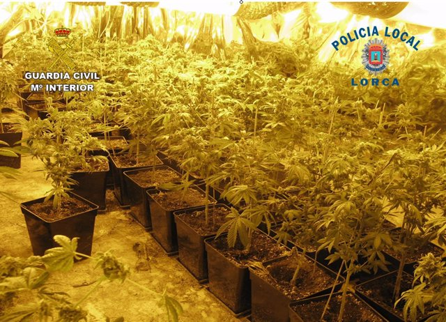 La Guardia Civil Y La Policía Local Desmantelan Un Invernadero De Marihuana