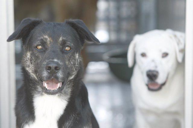 El Colegio de Abogados de Valencia crea la Sección de Derechos de los Animales