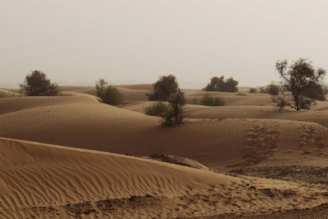 Dunas en el desierto del Sahara