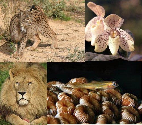 La Lista Roja de Especies en Peligro de Extinción