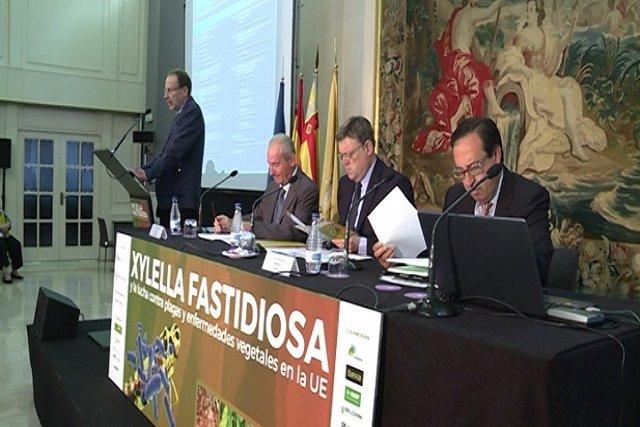 Jornada en Valencia sobre la bacteria 'xylella fastidiosa'