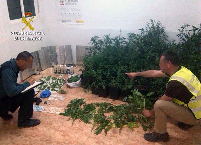 Guardia Civil desmantela un activo punto de cultivo y venta de marihuana